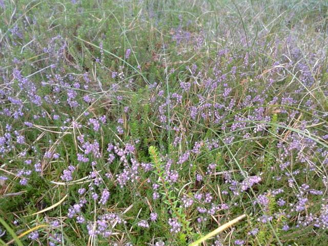 Violett im Wald