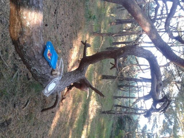 Picknick im Wald