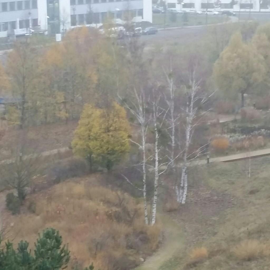November Grau