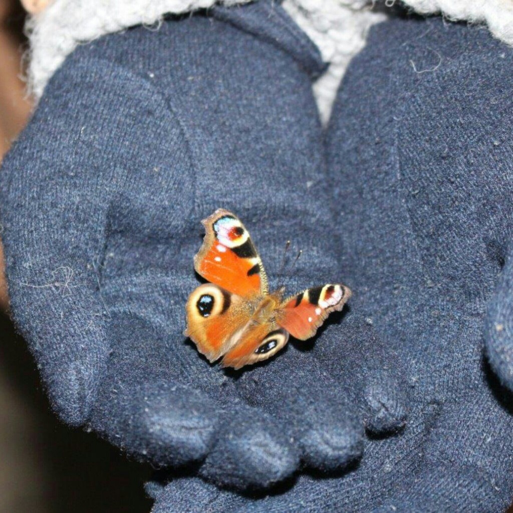 Schmetterling im Weihnachtsbaum