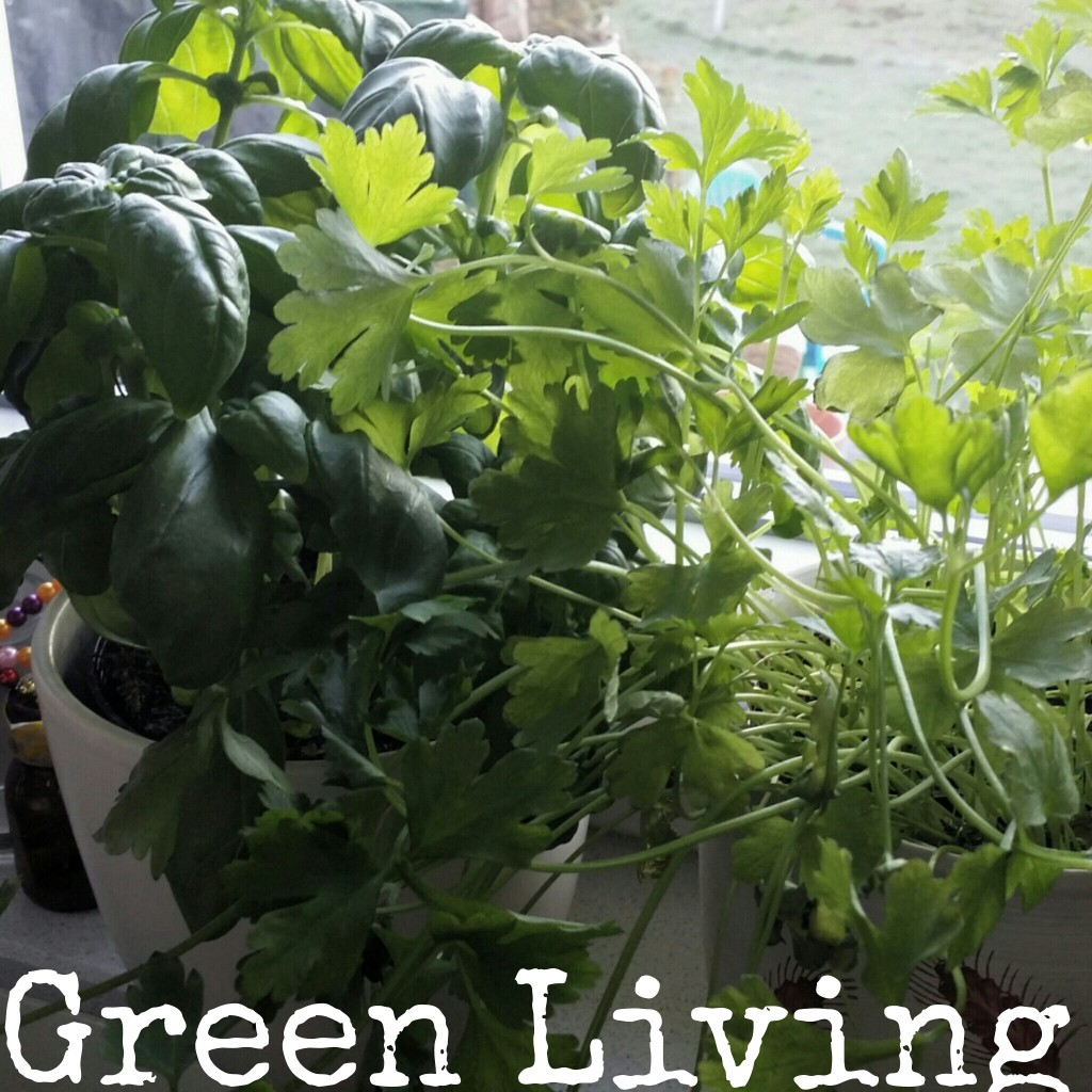 green living herbs