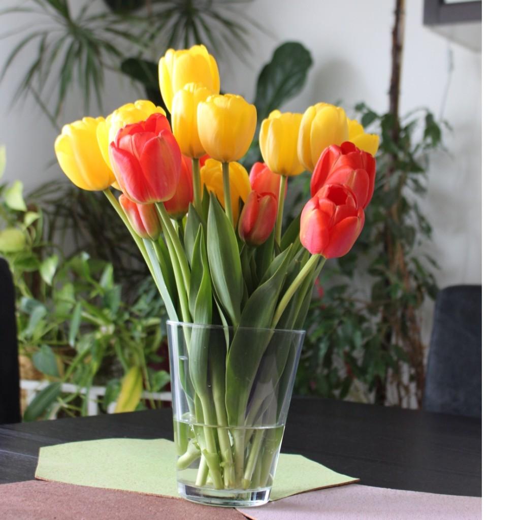 tulpen freilandtulpen