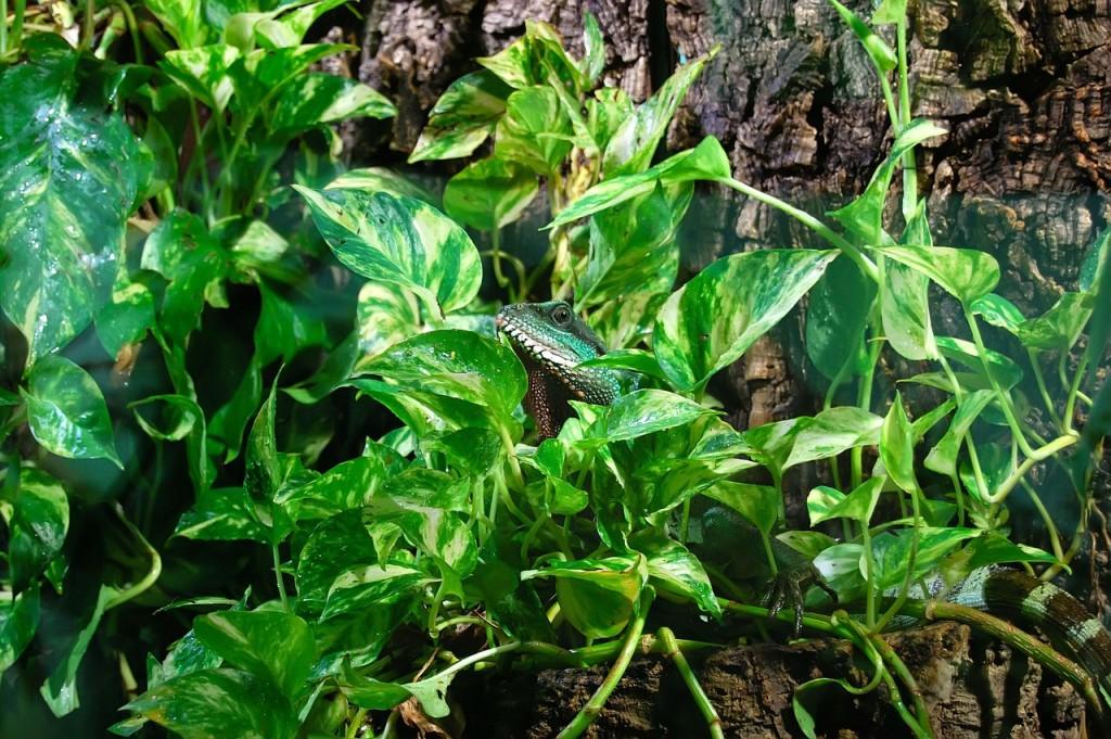 Dschungel biospäre